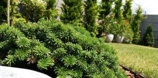 kertészeti árak